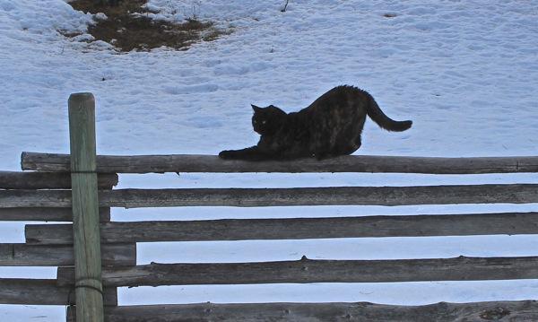 Soop yoga on fence