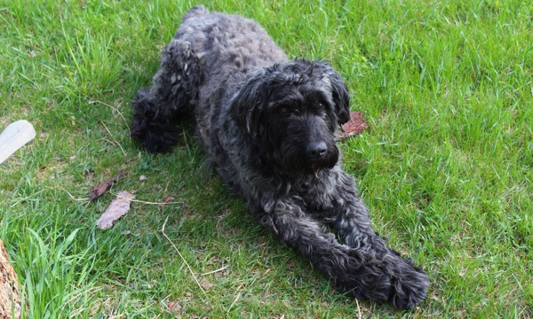 Django with bark