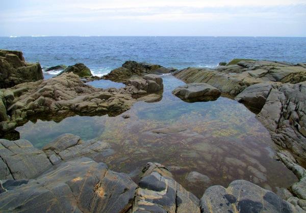 Tide pool oliver s cove head