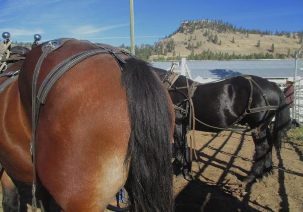 Slate and oscar rear ends