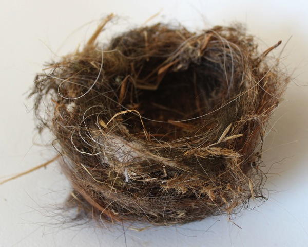 Bird s nest from barn 2