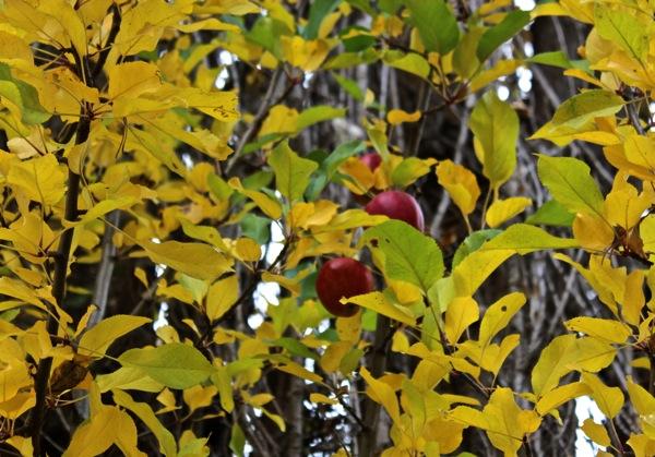 October three apples