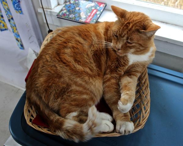 Winston in a basket