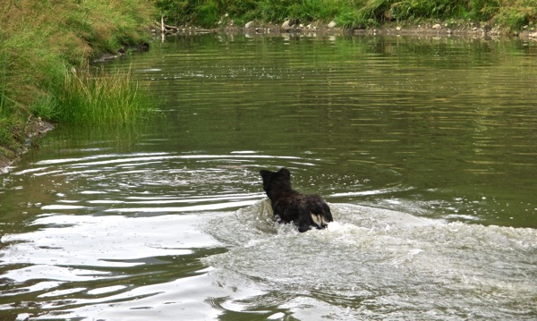 Pond fun 9