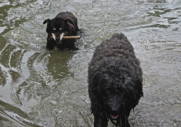 Pond fun2