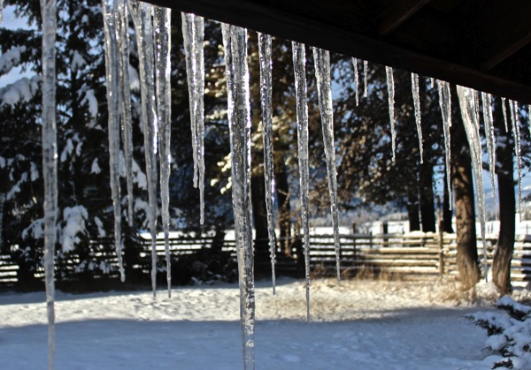 Icicles in sun