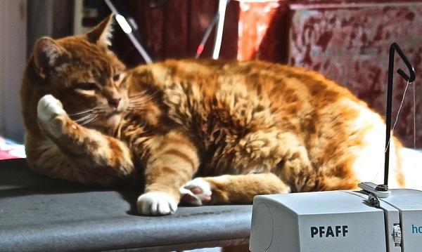 Winston on ironing board