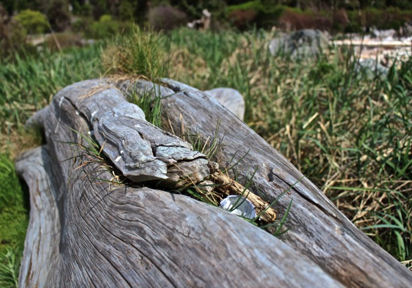 Driftwood and grass
