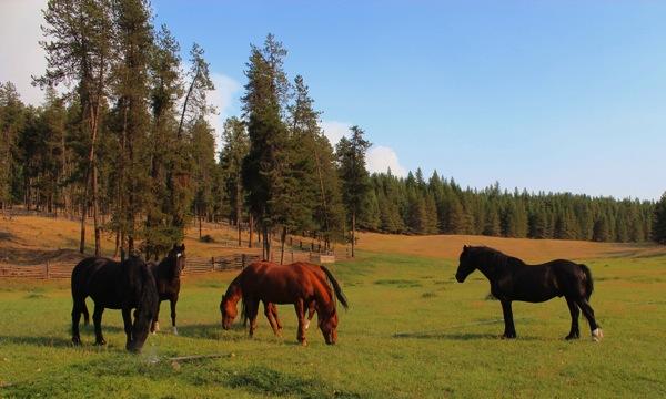 Rock Creek horses and smoke