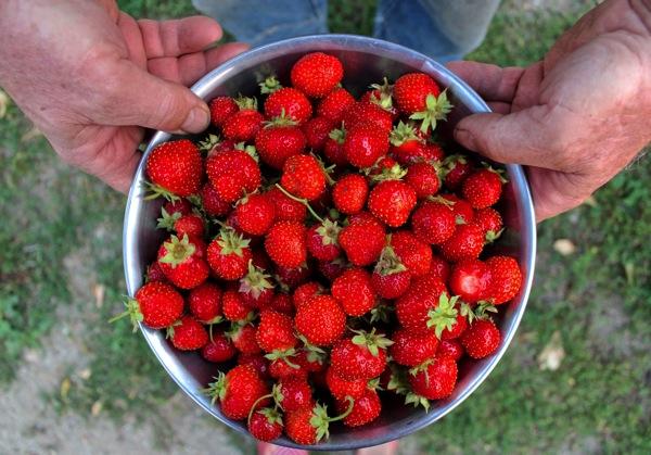 Bowl o berries 2