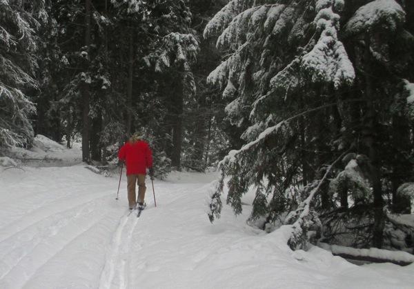 Skiing on the woodlot