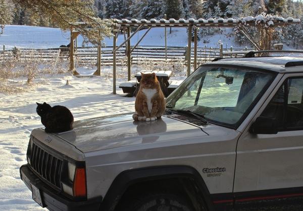 Warm jeep