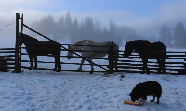 Horses ready for breakfast