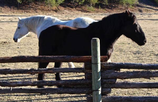 Horse dance 3