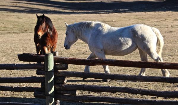 Horse dance 4