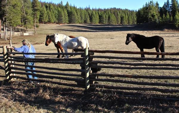 Horse dance 7