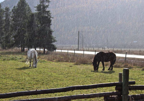 Ivy and oscar in rain