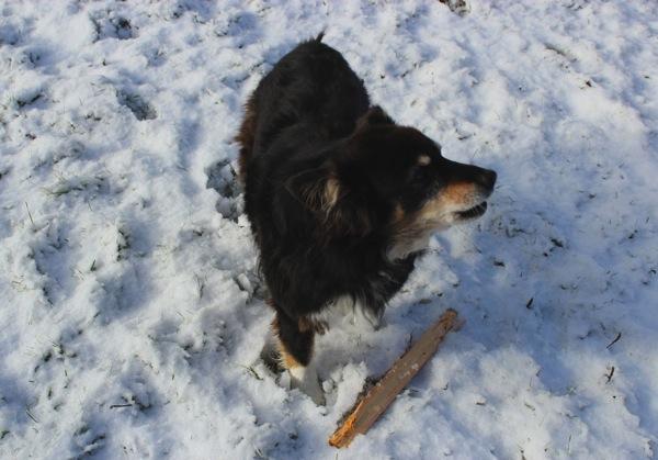 Yodel dog