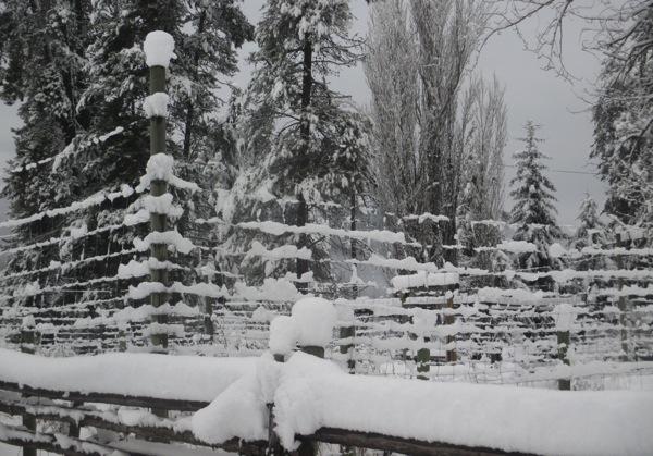 Snow on garden fence