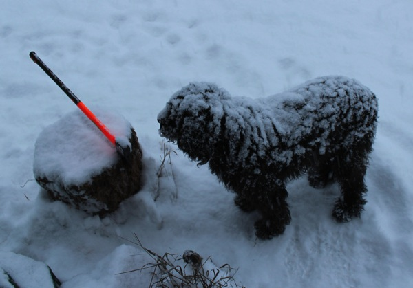 Snowy Django and axe