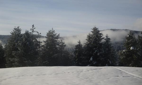 Snow trees mist