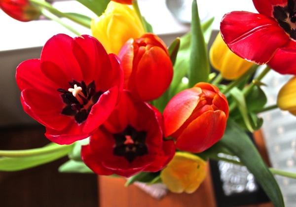 Mum s tulips