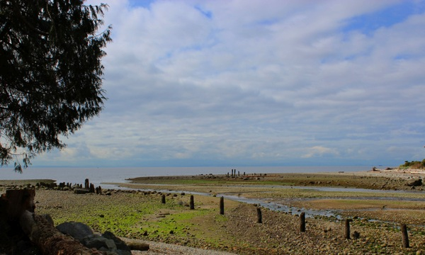 Low tide roberts creek
