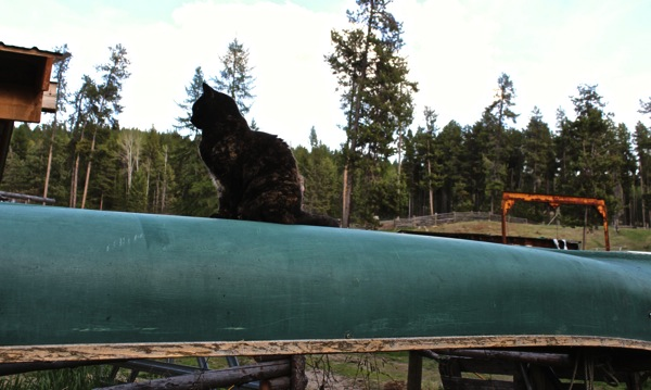 Soop on canoe
