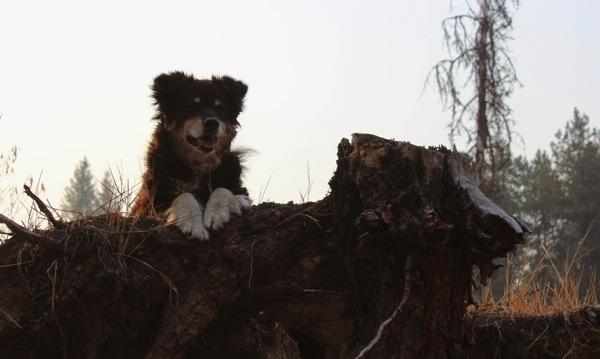 Watchdog sass