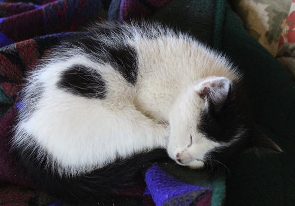 Tina asleep