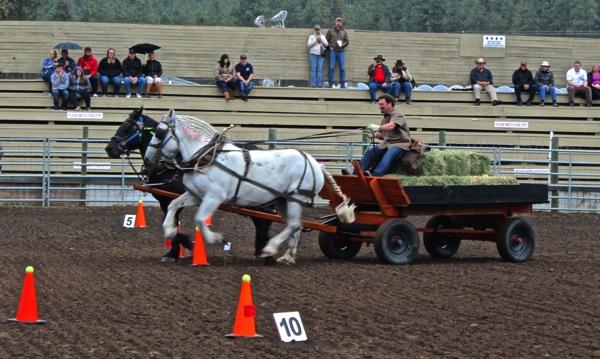 Ivy at a gallop