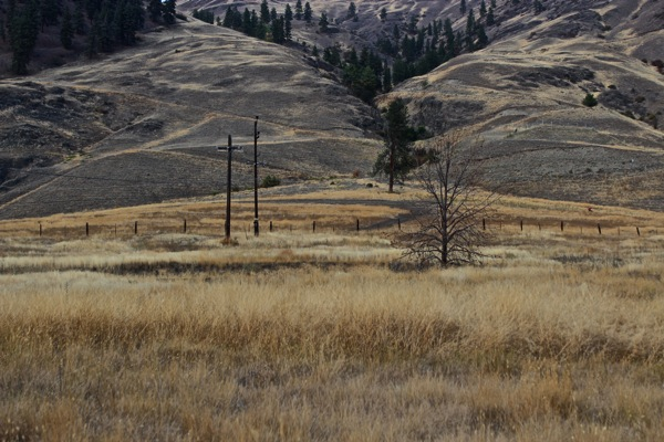 Tawny hills