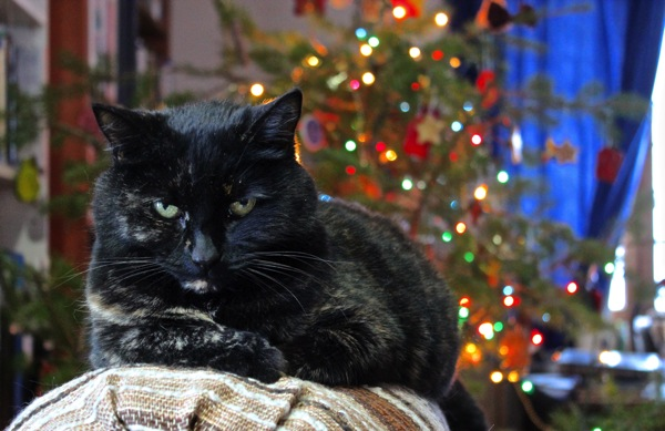 Scrooge cat