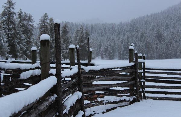 Cattle shute in snow