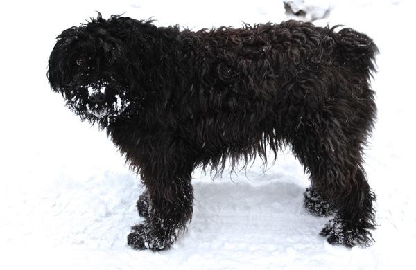Woolly snowy bear