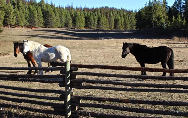 Horse dance 6