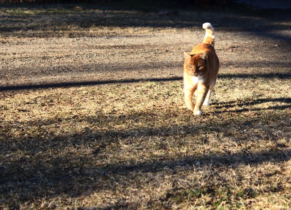 Winston in sunlight