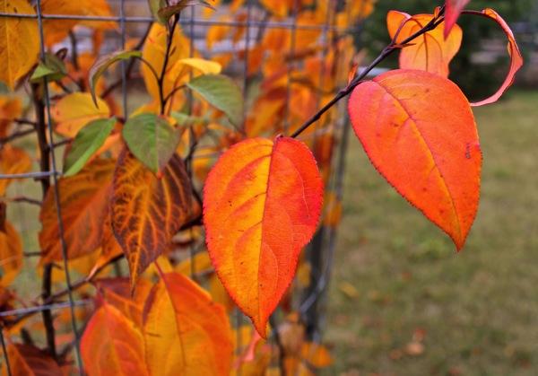 October mystery tree