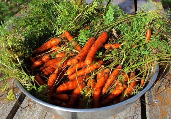 October carrots