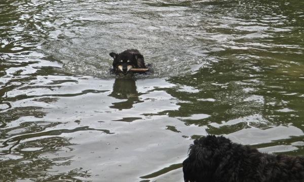 Pond fun 8