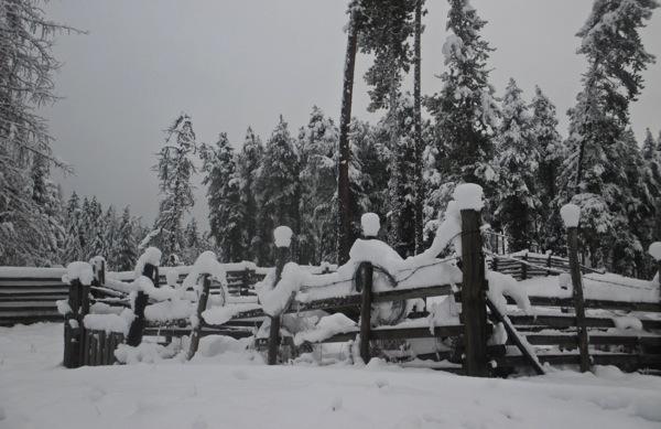 Snow caps on pigpen