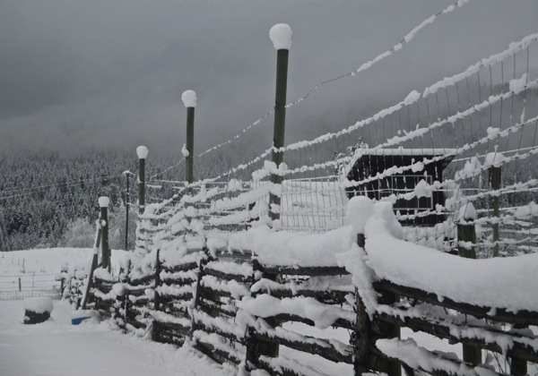 Caps of snow on garden fence posts