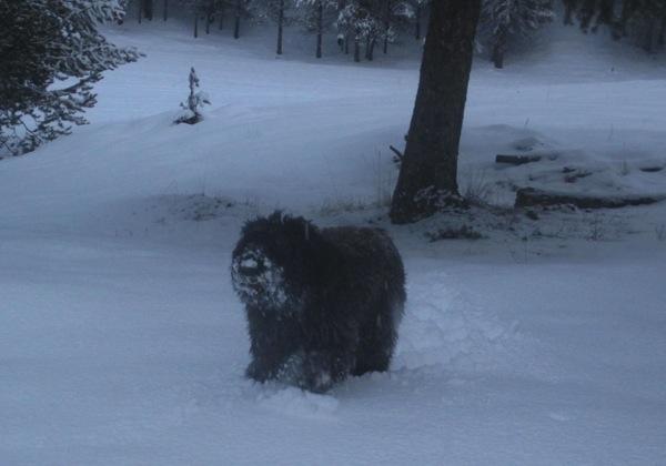Snow nose on Django