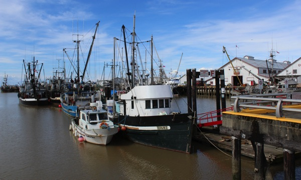Fishing boats tied up
