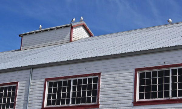 Rooftop gulls