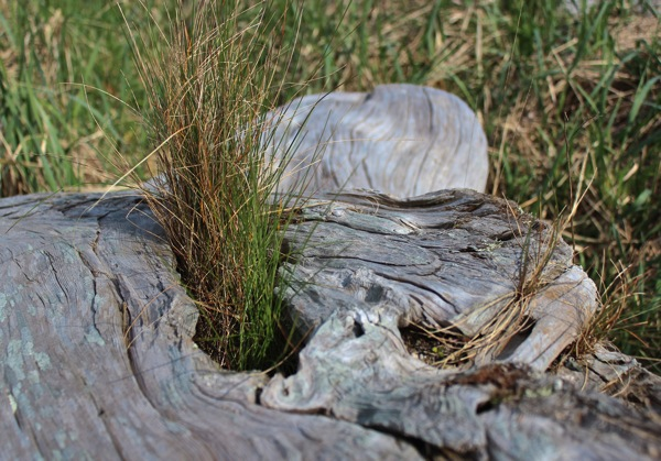 Driftwood and grass 2