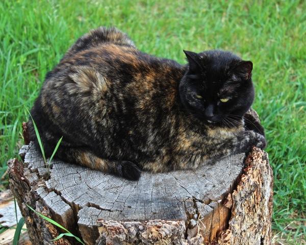Soop on stump