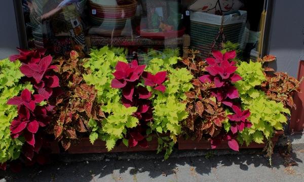 Flowerbox