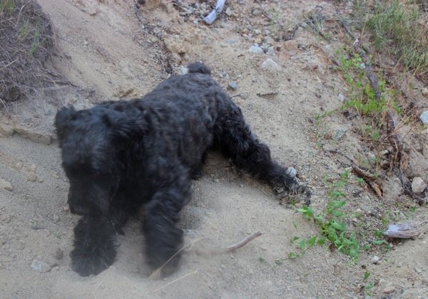 Django in sand pit