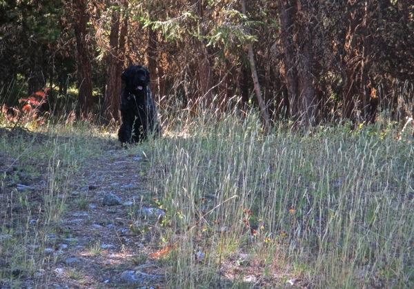Django waiting at trees